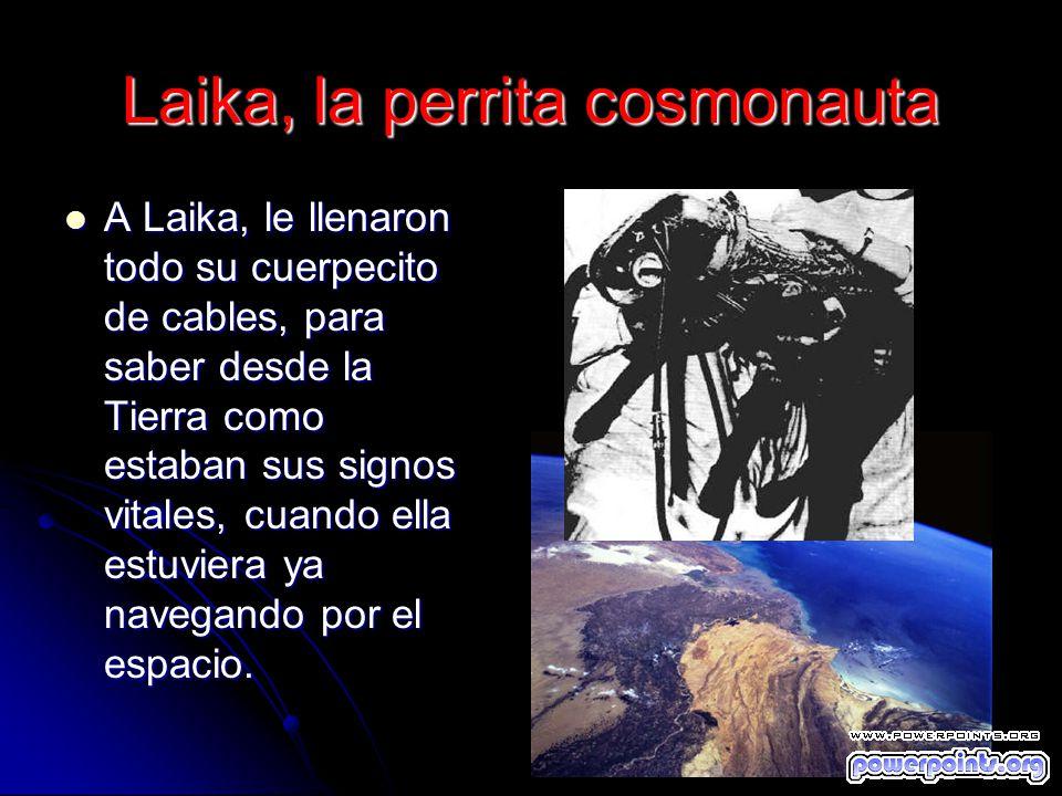 Laika, la perrita cosmonauta A Laika, le llenaron todo su cuerpecito de cables, para saber desde la Tierra como estaban sus signos vitales, cuando ell
