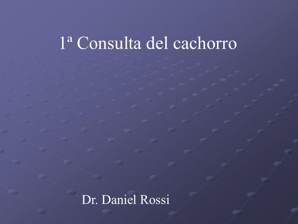 1ª Consulta del cachorro Dr. Daniel Rossi