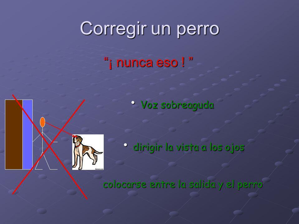 Corregir un perro Inclinarse Manos sobre la cintura Mirada hacia la grupa Voz grave, tono seguro Cinética fluida Expulsar el perro del lugar de confli