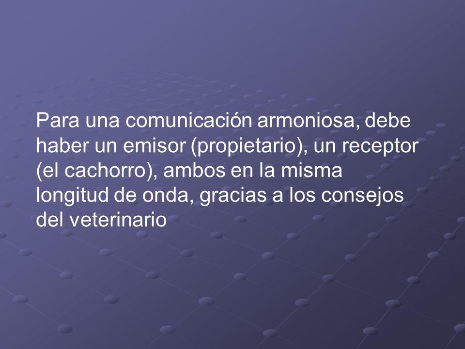 Para una comunicación armoniosa, debe haber un emisor (propietario), un receptor (el cachorro), ambos en la misma longitud de onda, gracias a los consejos del veterinario