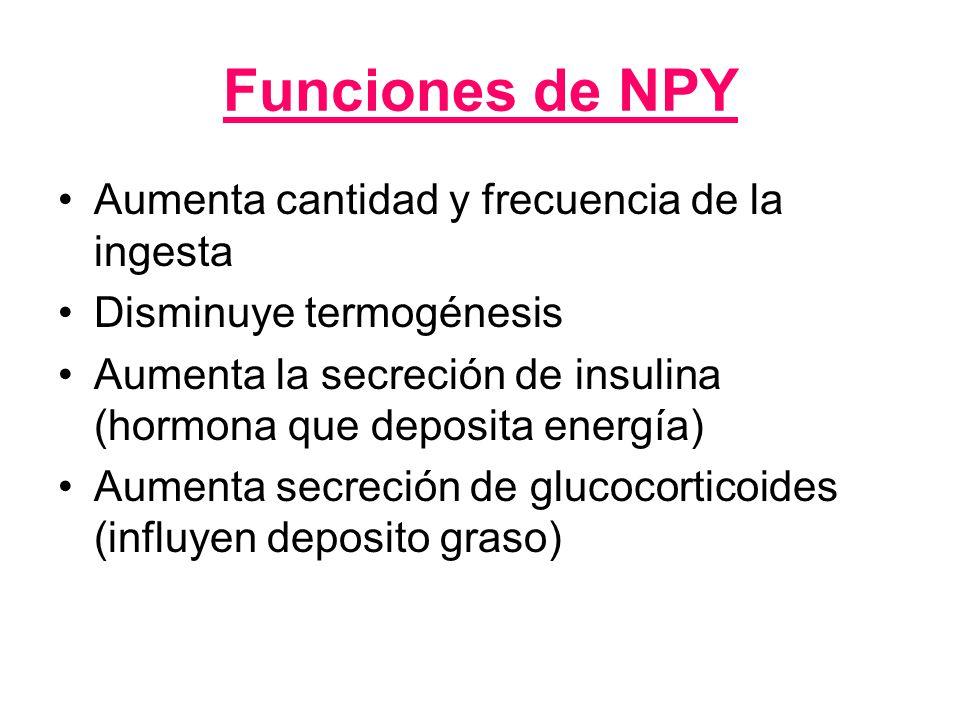 Leptina Grasa Insulina LEPTINA Hormona que se sintetiza a nivel del tejido adiposo y tiene receptores en hipotálamo Síntesis NPY SACIEDAD