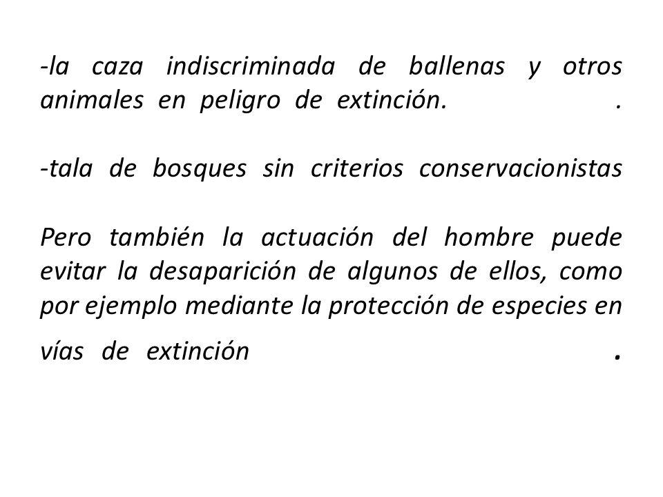 -la caza indiscriminada de ballenas y otros animales en peligro de extinción..