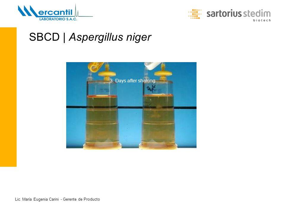 Lic. María Eugenia Carini - Gerente de Producto SBCD | Aspergillus niger 1. Tag 2. Tag 3. Tag 3. Days after shaking
