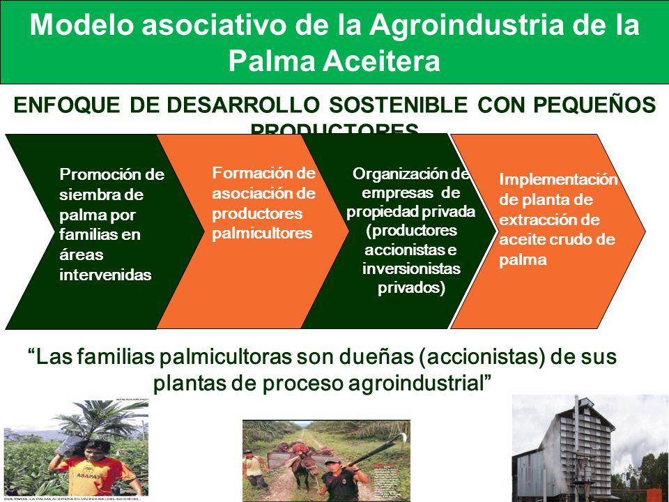 ENFOQUE DE DESARROLLO SOSTENIBLE CON PEQUEÑOS PRODUCTORES Promoción de siembra de palma por familias en áreas intervenidas Formación de asociación de productores palmicultores Organización de empresas de propiedad privada (productores accionistas e inversionistas privados) Implementación de planta de extracción de aceite crudo de palma Las familias palmicultoras son dueñas (accionistas) de sus plantas de proceso agroindustrial Modelo asociativo de la Agroindustria de la Palma Aceitera