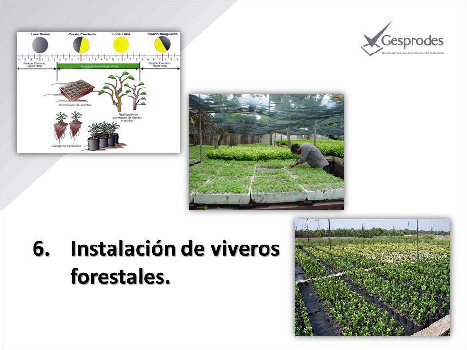 6.Instalación de viveros forestales.