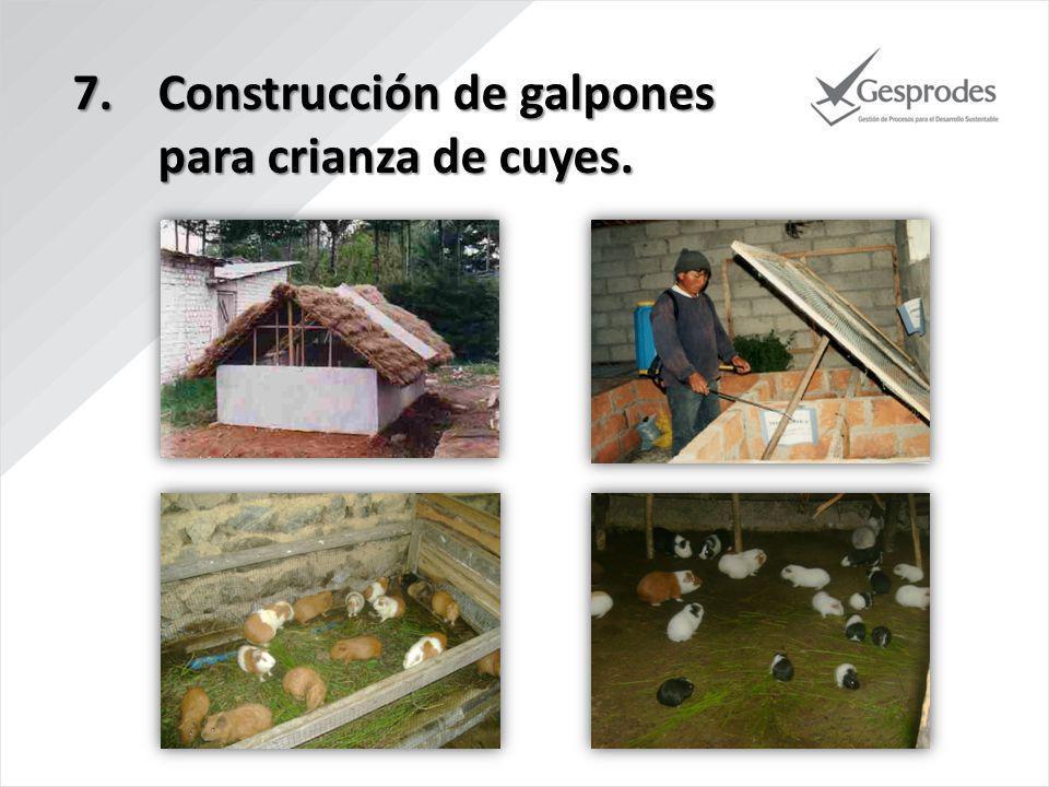 7.Construcción de galpones para crianza de cuyes.