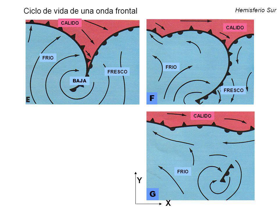 CALIDO FRIO FRESCO BAJA F G Hemisferio Sur Y X Ciclo de vida de una onda frontal
