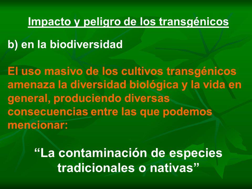 Impacto y peligro de los transgénicos b) en la biodiversidad El uso masivo de los cultivos transgénicos amenaza la diversidad biológica y la vida en general, produciendo diversas consecuencias entre las que podemos mencionar: La contaminación de especies tradicionales o nativas