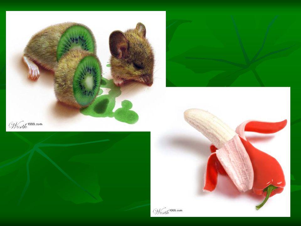 Los transgénicos son seres vivos (plantas, animales o microorganismos) que han sido modificados en laboratorio mediante la introducción de genes de otras especies de seres vivos, para proporcionarles características que nunca obtendrían de forma natural.