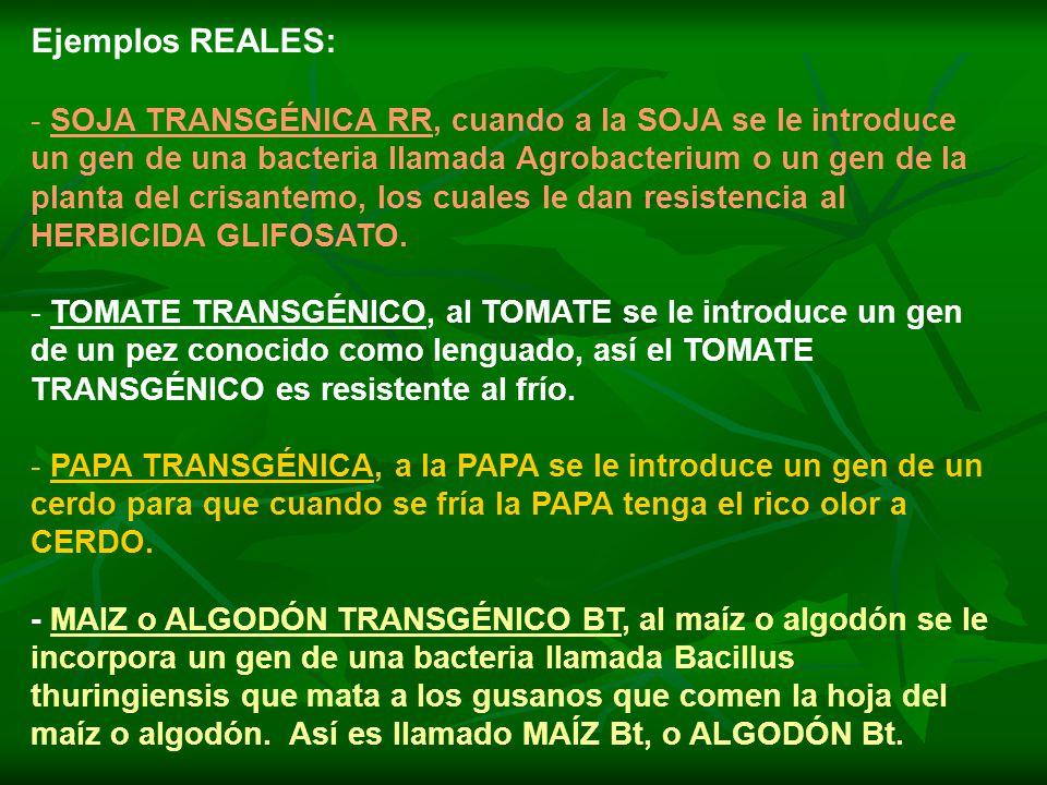 Ejemplos REALES: - SOJA TRANSGÉNICA RR, cuando a la SOJA se le introduce un gen de una bacteria llamada Agrobacterium o un gen de la planta del crisantemo, los cuales le dan resistencia al HERBICIDA GLIFOSATO.