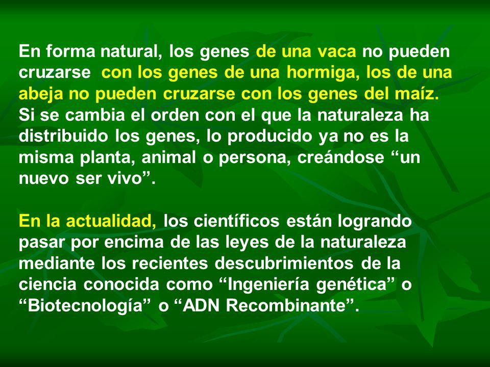 En forma natural, los genes de una vaca no pueden cruzarse con los genes de una hormiga, los de una abeja no pueden cruzarse con los genes del maíz. S