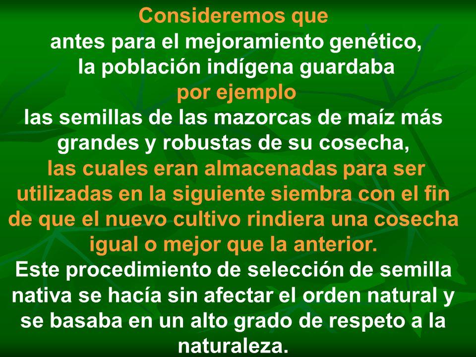 Consideremos que antes para el mejoramiento genético, la población indígena guardaba por ejemplo las semillas de las mazorcas de maíz más grandes y ro