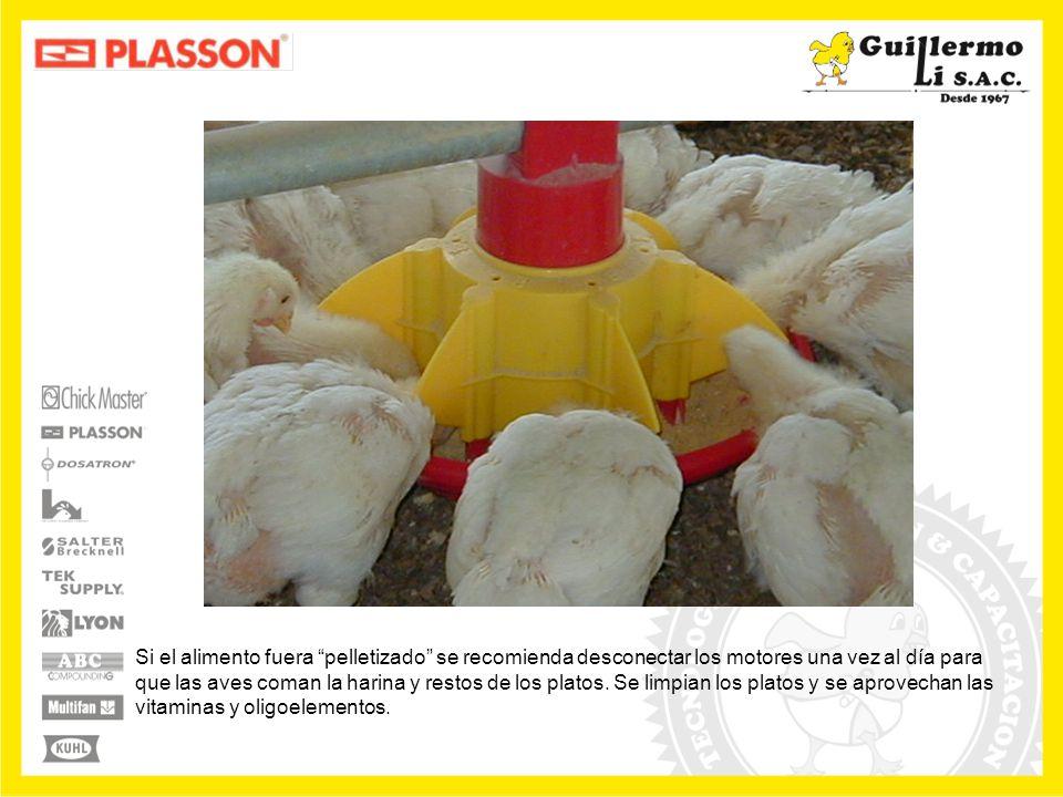 Si el alimento fuera pelletizado se recomienda desconectar los motores una vez al día para que las aves coman la harina y restos de los platos.