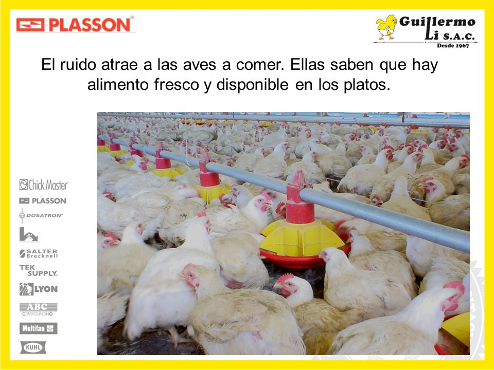 El ruido atrae a las aves a comer. Ellas saben que hay alimento fresco y disponible en los platos.