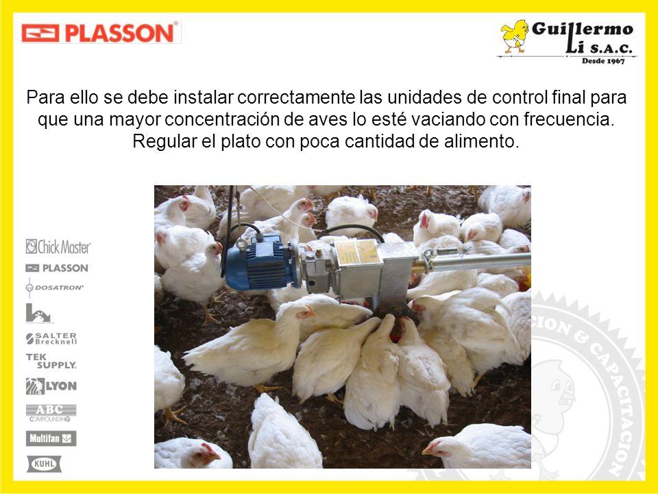 Recuérdese que el comedero no es un transportador mecánico de alimento, debe ser un estimulante para que las aves coman más.
