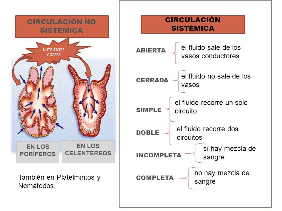 ABIERTA CERRADA SIMPLE DOBLE INCOMPLETA COMPLETA CIRCULACIÓN NO SISTÉMICA CIRCULACIÓN SISTÉMICA el fluido no sale de los vasos el fluido recorre un so