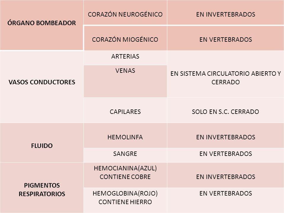 ÓRGANO BOMBEADOR CORAZÓN NEUROGÉNICOEN INVERTEBRADOS CORAZÓN MIOGÉNICOEN VERTEBRADOS VASOS CONDUCTORES ARTERIAS EN SISTEMA CIRCULATORIO ABIERTO Y CERR