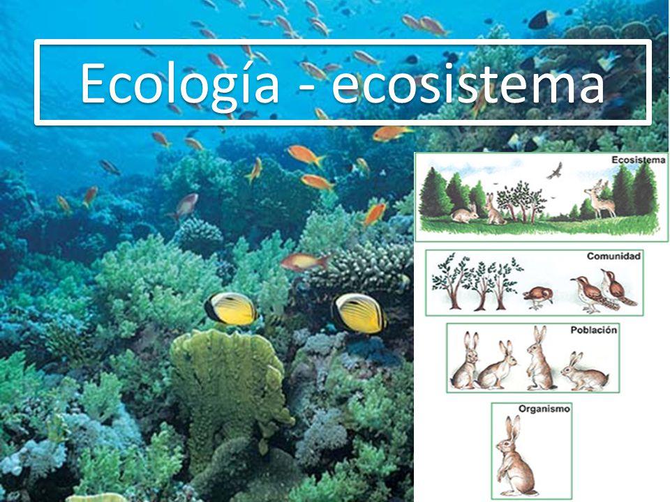 Nicho ecológico Es la función que realiza un organismo al interior del ecosistema PRODUCTORES FOTOSINTÉTICOS QUIMIOSINTÉTICOS CIANOBAC TERIAS SULFOBAC TERIAS CONSUMIDORES HERBÍVOROS CARNÍVOROS CARROÑEROS VICUÑAS, PUMAS,CO NDOR DESINTERGADORES SAPROZOOS SAPRÓFITOS HONGOS, BACTERIAS HÁBITAT Es el lugar donde un organismo cumple su ciclo vital El cóndor tiene como hábitat los andes y como nicho ecológico alimentarse de carroña