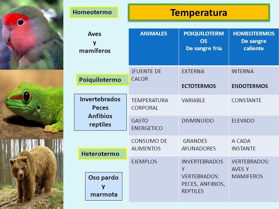 La fotoperiocidad es la reacción fisiológica de los organismos, plantas y animales, a la duración del día o la noche. plantasanimales Ritmo circadiano