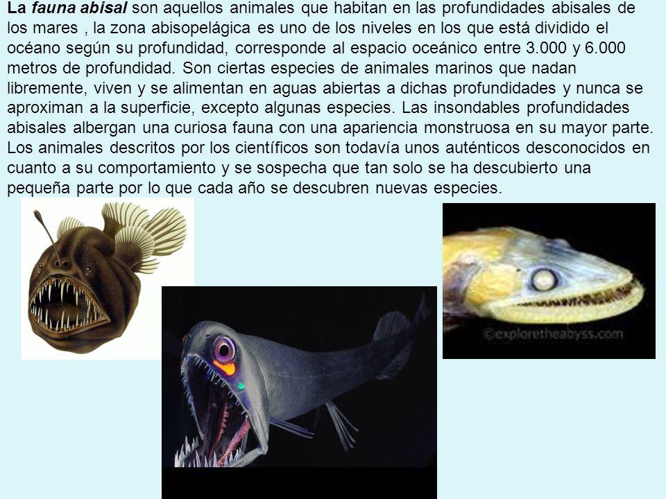 AGUAAGUA Eurihalinos Estenohalinos CatadromoAnádromo Halófilas mucha salinidad Glucofitas Poca salinidad salmón anguila Salicornia Ichu En ecología se