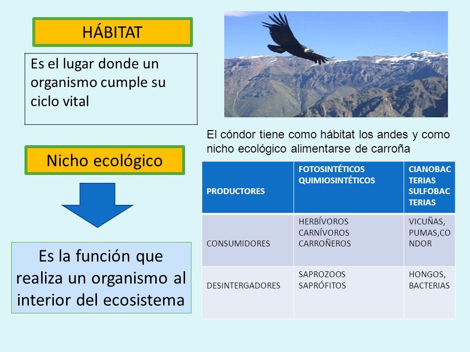 Factores bióticos Son las relaciones que se establecen entre los seres vivos de un ecosistema y que condicionan su existencia. Por ejemplo: un león, u