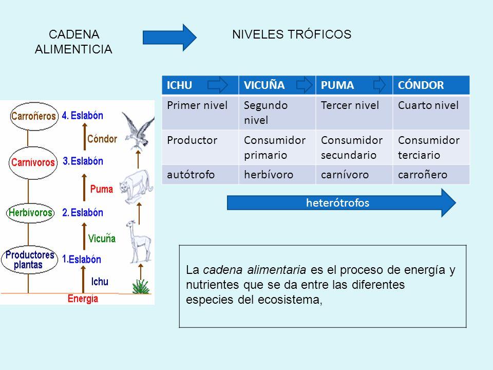 La función más importante de las bacterias en un ecosistema es A)Servir como alimento de los protozoarios B)Ser productoras primarias de la cadena ali