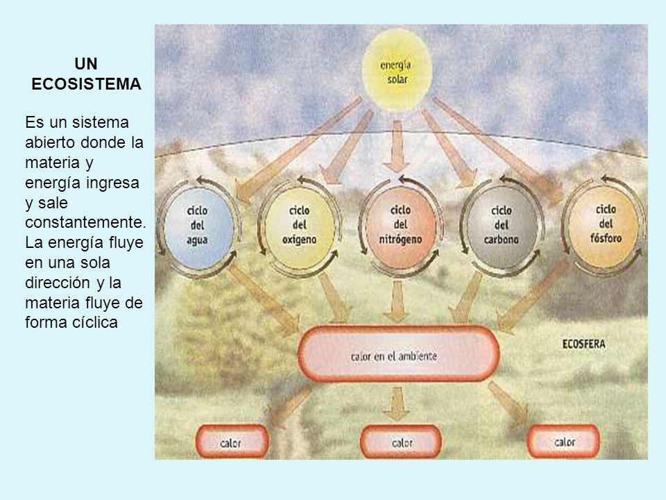 UN ECOSISTEMA Es un sistema abierto donde la materia y energía ingresa y sale constantemente.
