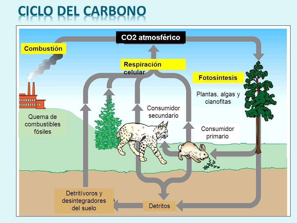 Ciclos biogeoquímicos TIPOSTIPOS Ciclos gaseosos Carbono Nitrógeno agua Ciclos sedimentarios Fosforo azufre