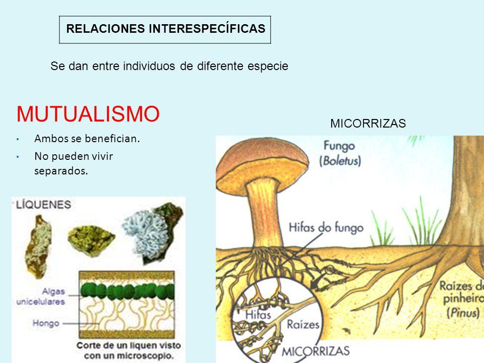 La relación intraespecífica, en la que algunas especies se diferencian morfológicamente según la función que realizan, es conocida como A)Sociedades B