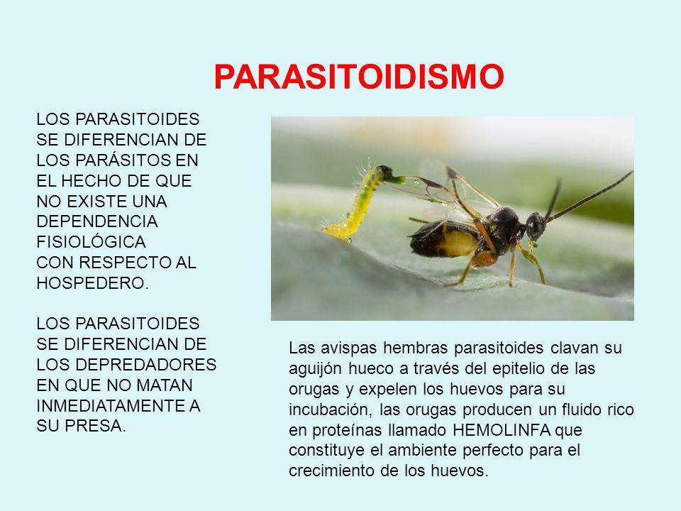 PARASITISMO Una especie se beneficia de otra especie y la perjudica