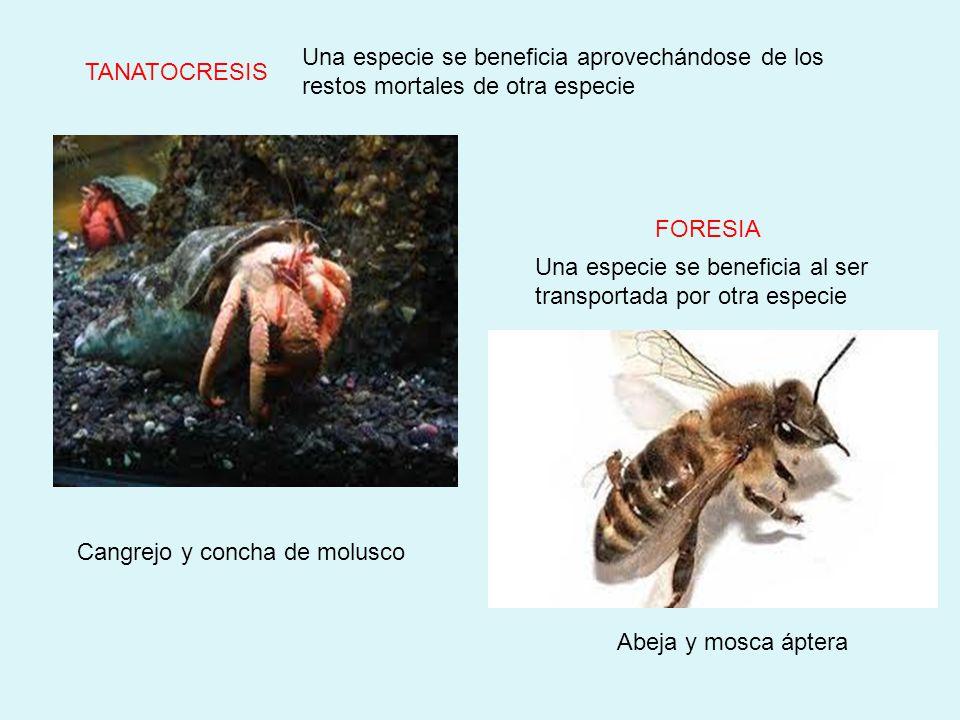 INQUILINISMO Una especie pequeña (inquilina) se beneficia de la protección de uno más grande (hospedero). EPIFITISMO Pájaro carpintero y árbol Una esp