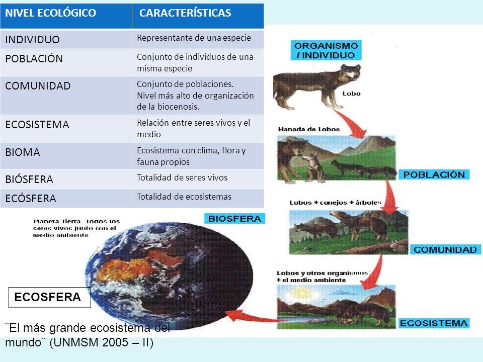 NIVEL ECOLÓGICO CARACTERÍSTICAS INDIVIDUO Representante de una especie POBLACIÓN Conjunto de individuos de una misma especie COMUNIDAD Conjunto de poblaciones.