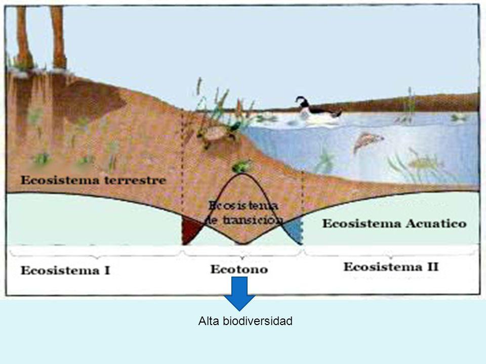 AGUAAGUA Eurihalinos Estenohalinos CatadromoAnádromo Halófilas mucha salinidad Glucofitas Poca salinidad salmón anguila Salicornia Ichu En ecología se llama bentos ( fondo marino ) a la comunidad formada por los organismos que habitan el fondo de los ecosistemas acuáticos.ecologíaecosistemas Estrellas de mar, erizos de mar