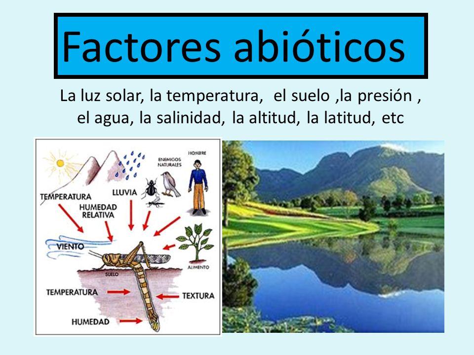 AMENSALISMO Una especie produce sustancias inhibidoras que impide el crecimiento de otra especie.
