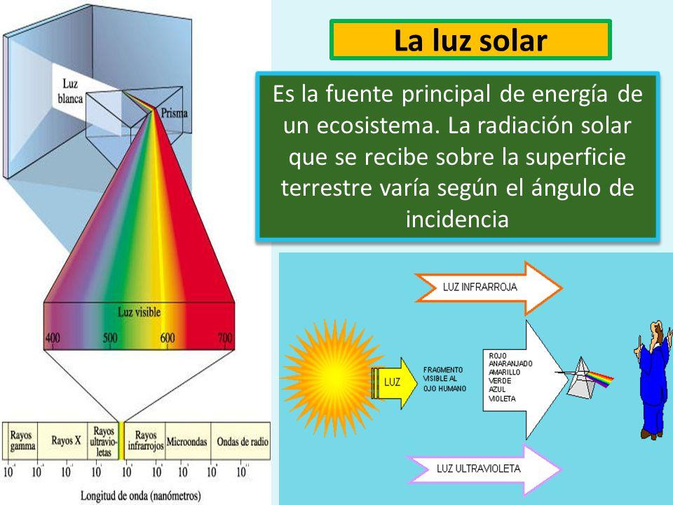 Factores abióticos La luz solar, la temperatura, el suelo,la presión, el agua, la salinidad, la altitud, la latitud, etc