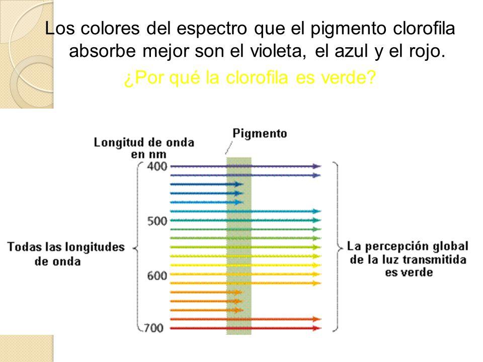 IMPORTANCIA BIOLÓGICA DE LA FOTOSÍNTESIS Producción de alimentos.