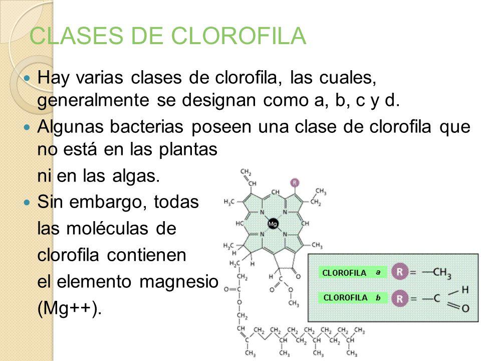 Los colores del espectro que el pigmento clorofila absorbe mejor son el violeta, el azul y el rojo. ¿Por qué la clorofila es verde?