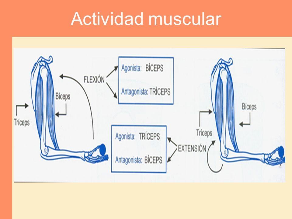 Actividad muscular
