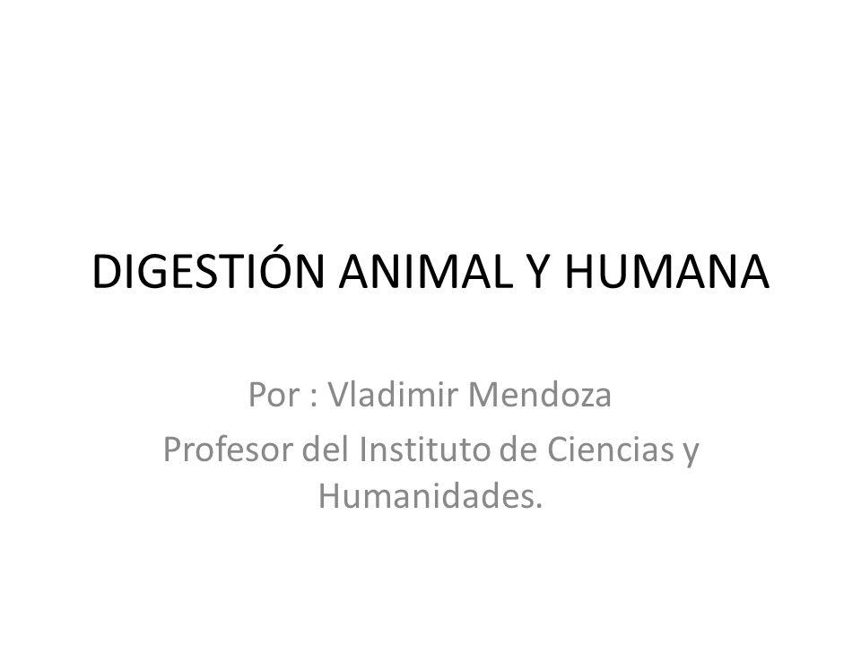 DIGESTIÓN ANIMAL Y HUMANA Por : Vladimir Mendoza Profesor del Instituto de Ciencias y Humanidades.