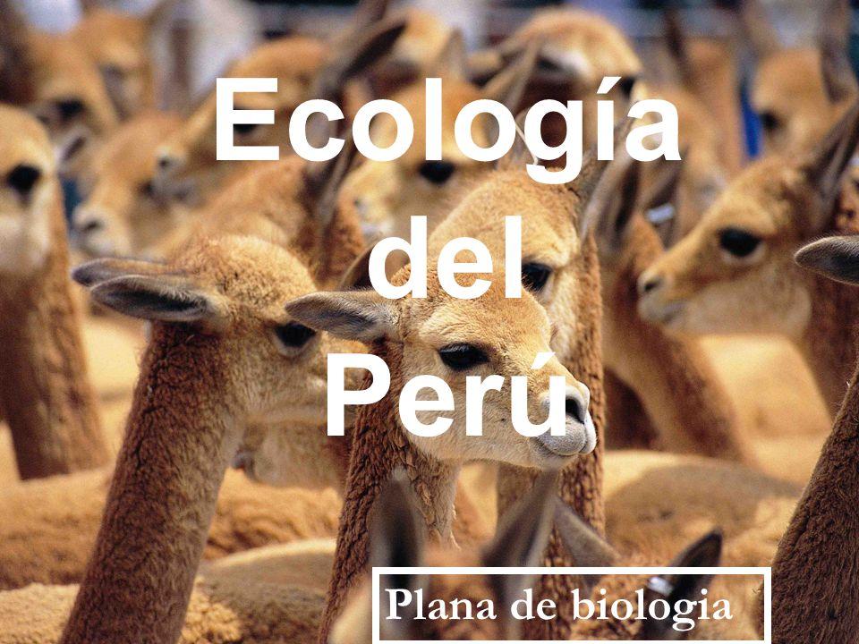 Ecología del Perú Plana de biologia