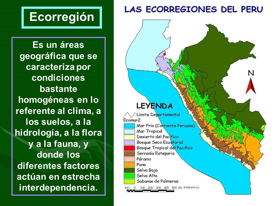 Es un áreas geográfica que se caracteriza por condiciones bastante homogéneas en lo referente al clima, a los suelos, a la hidrología, a la flora y a