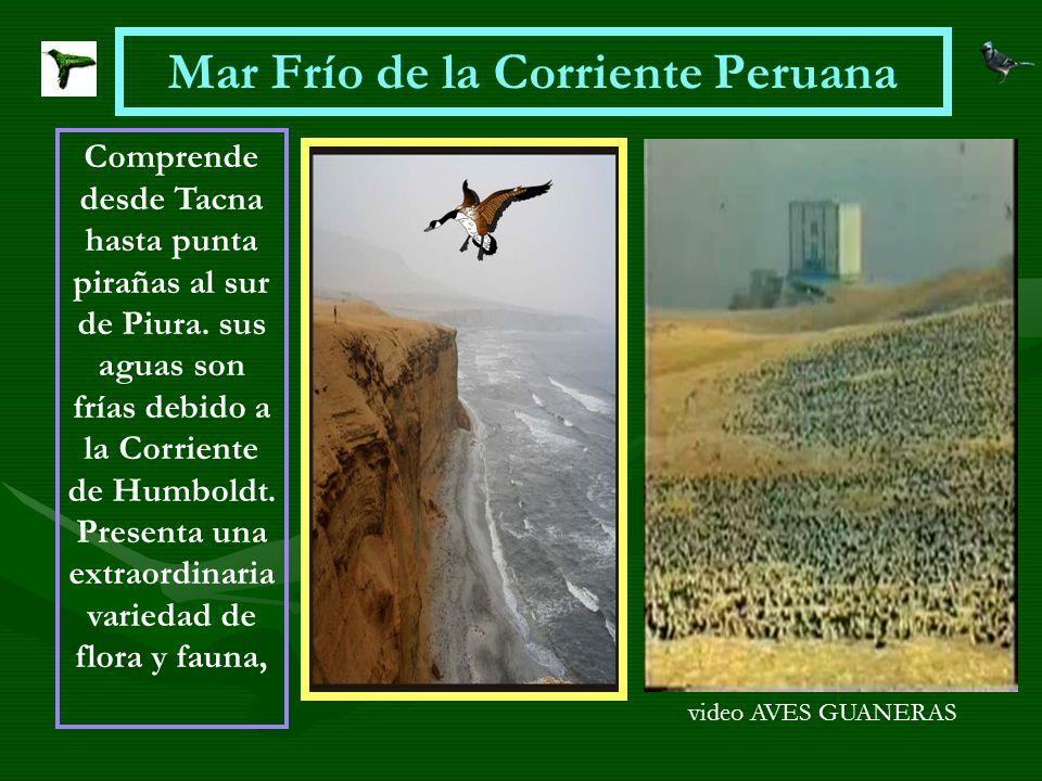 Mar Frío de la Corriente Peruana Comprende desde Tacna hasta punta pirañas al sur de Piura. sus aguas son frías debido a la Corriente de Humboldt. Pre