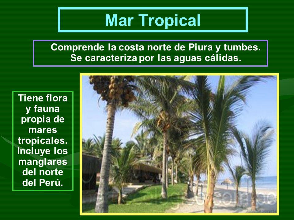 Mar Tropical Comprende la costa norte de Piura y tumbes. Se caracteriza por las aguas cálidas. Tiene flora y fauna propia de mares tropicales. Incluye
