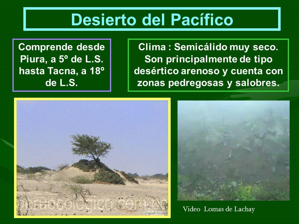 Desierto del Pacífico Comprende desde Piura, a 5º de L.S. hasta Tacna, a 18º de L.S. Clima : Semicálido muy seco. Son principalmente de tipo desértico