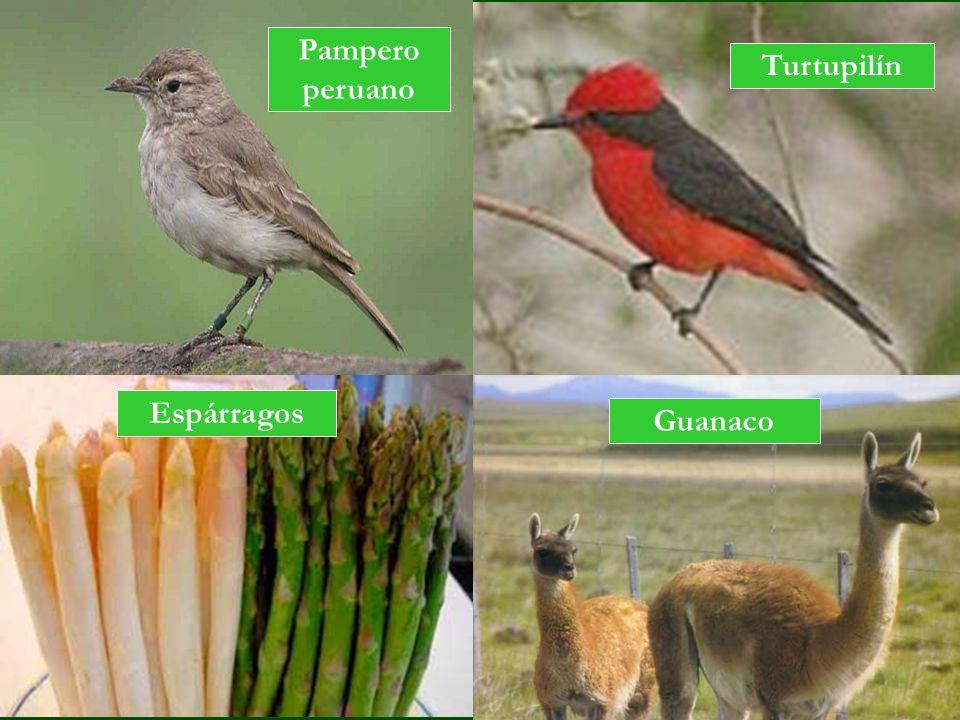 Turtupilín Guanaco Espárragos Pampero peruano
