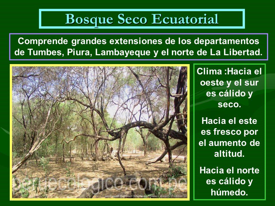 Bosque Seco Ecuatorial Comprende grandes extensiones de los departamentos de Tumbes, Piura, Lambayeque y el norte de La Libertad. Clima :Hacia el oest