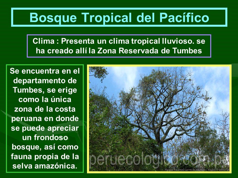 Bosque Tropical del Pacífico Se encuentra en el departamento de Tumbes, se erige como la única zona de la costa peruana en donde se puede apreciar un