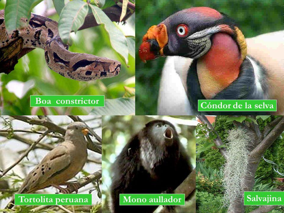 Boa constrictor Cóndor de la selva Tortolita peruana Salvajina Mono aullador