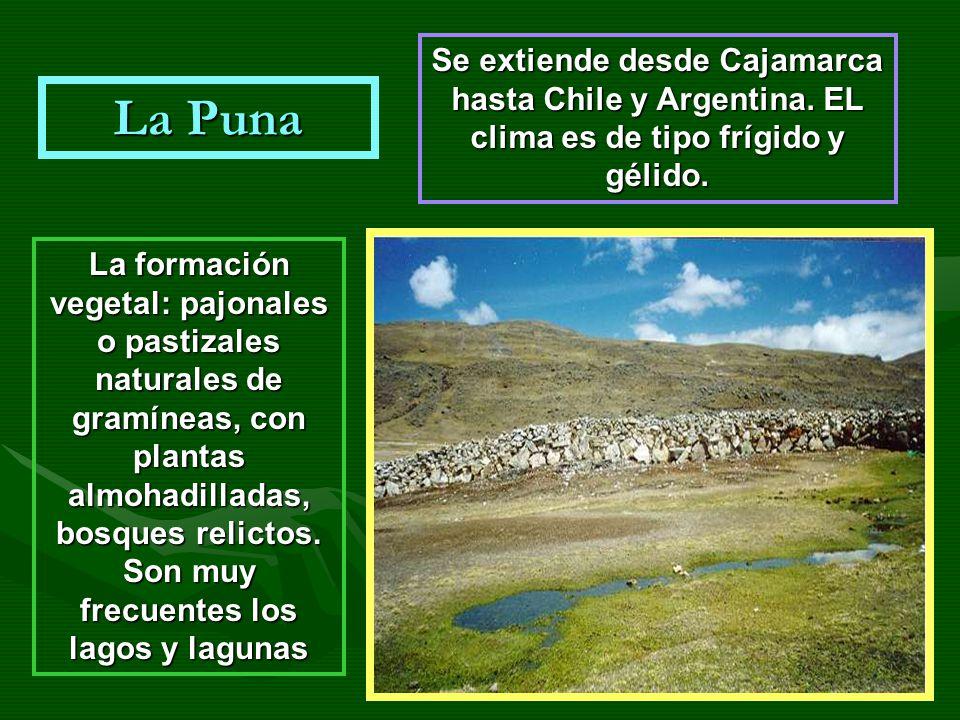 La Puna Se extiende desde Cajamarca hasta Chile y Argentina. EL clima es de tipo frígido y gélido. La formación vegetal: pajonales o pastizales natura
