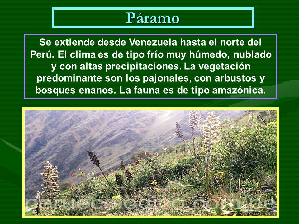 Páramo Se extiende desde Venezuela hasta el norte del Perú. El clima es de tipo frío muy húmedo, nublado y con altas precipitaciones. La vegetación pr